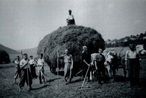 Getreideernte in Baiersbronn